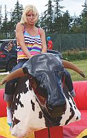 rodeo býk / bizon